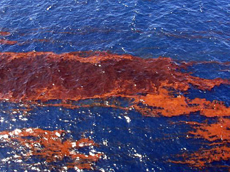 noaa-oil-spill-photo11
